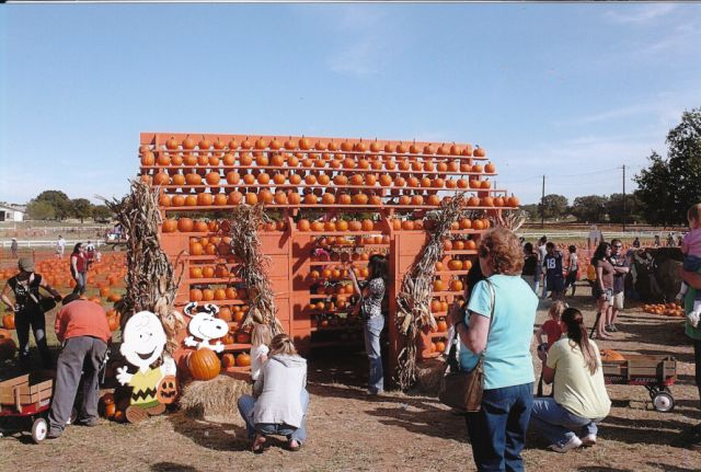 FMPP Pumpkin House
