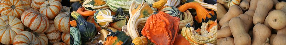 pumpkin-types